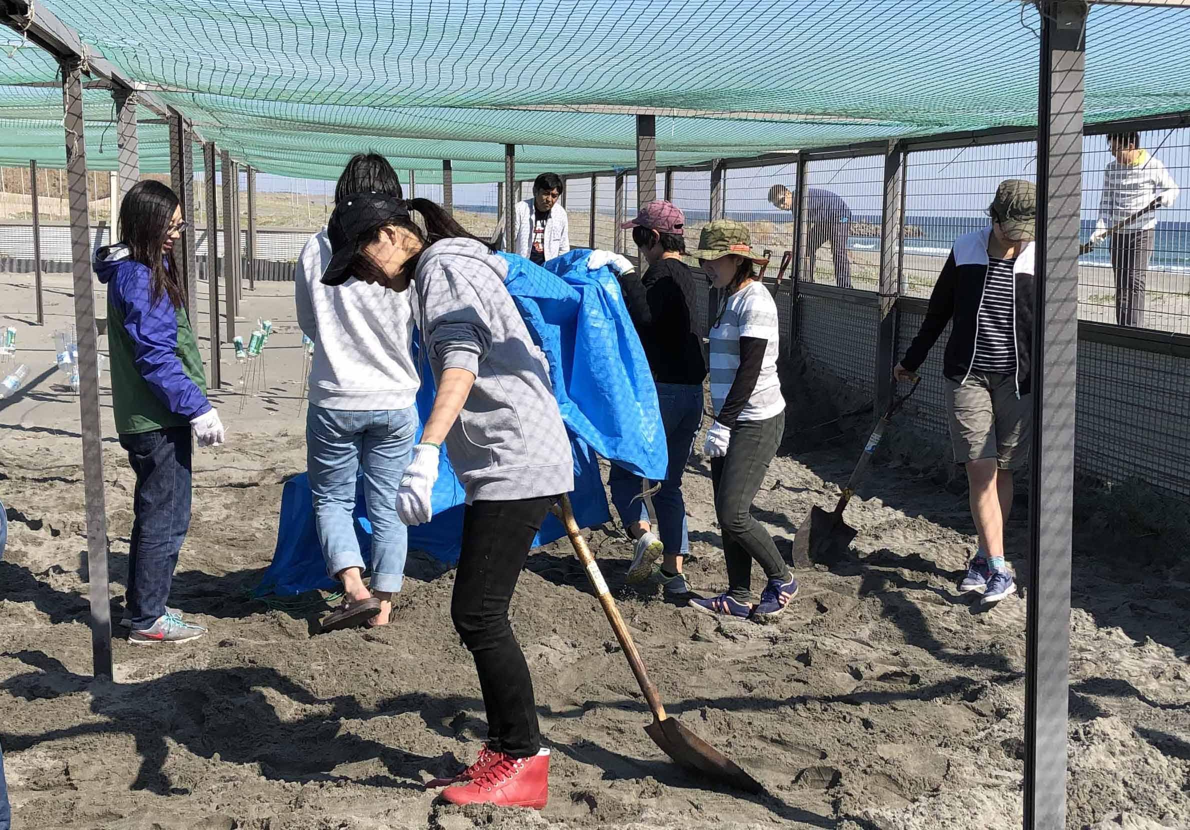ウミガメの卵の保護柵整備